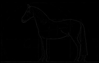 chiropraktikerin pferd düsseldorf